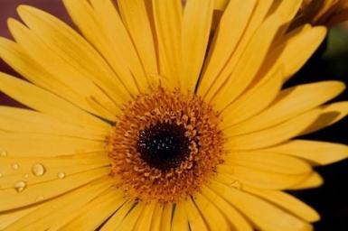 fleur_jaune_novembre
