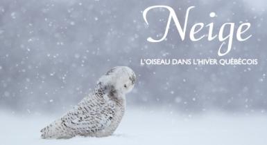 photo-Neige_oiseau_1