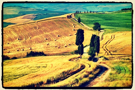 42728668 - classic tuscan winding road in summer landscape