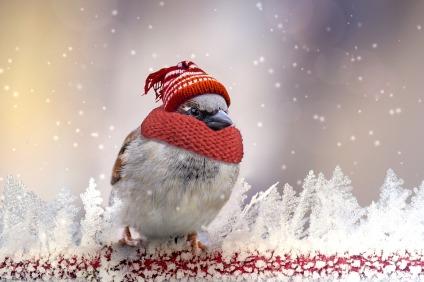 oiseau_froid